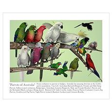 Parrots of Australia Poster