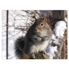 Gray squirrel Framed Print