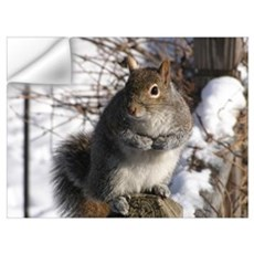 Gray squirrel Wall Decal