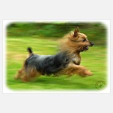 Australian Silky Terrier 9B19D-03 ri