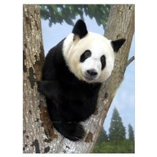 Giant Panda 2 Poster
