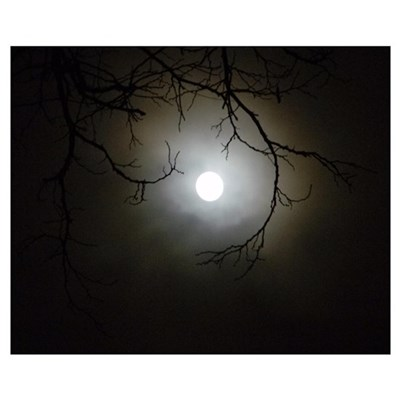 Winter Moonglow Framed Print