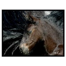 Friesian Foal Poster
