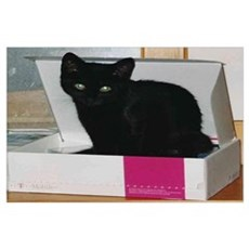 Nicy in Box Poster