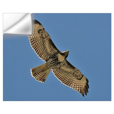 Red-Tailed Hawk Wall Decal
