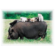 Pig & Kittens Poster