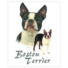 Boston Terrier-2 Framed Print