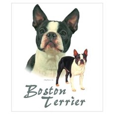 Boston Terrier-2 Poster