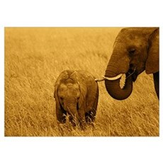 African Elephant baby & Mom Poster