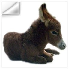 donkey colt Wall Decal