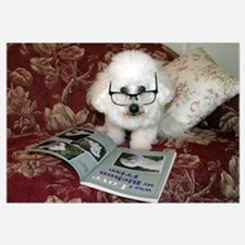 You just Gotta Love a Bichon