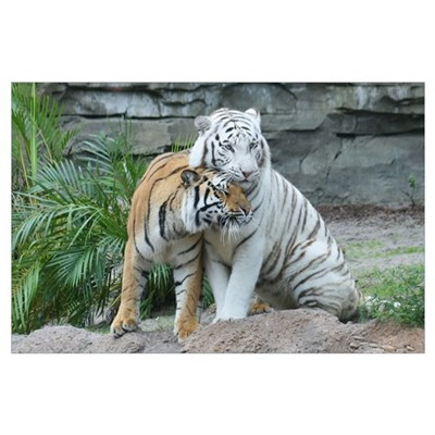 -Tigers Poster