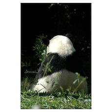 Panda Back Poster