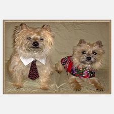 Cairn Terrier Duo