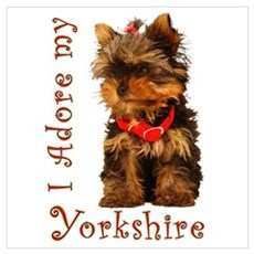 Yorkie Puppy Poster