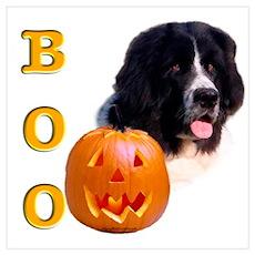 Halloween Landseer Newfoundland Boo Poster