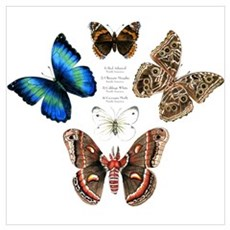 Butterfly and Moth Sampler Canvas Art