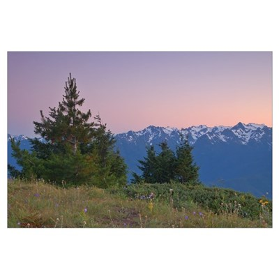 Olympic Mountain Sunset Poster