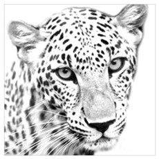 BCR Leopard Poster