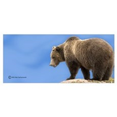 """""""Grizzly in the Clouds"""" Economy Print Poster"""