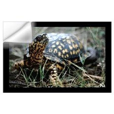 Eastern Box Turtle Print Wall Decal