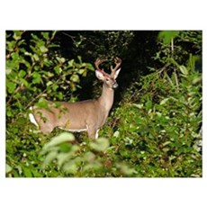 Young 10 pt. Poster