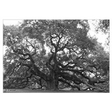 (Angel Oak) Canvas Art