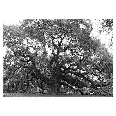 (Angel Oak) Poster