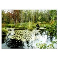 Pond Ripples Poster