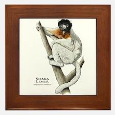 Sifaka Lemur Framed Tile