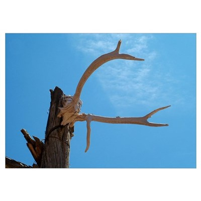 Horns & Sky Poster