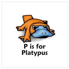 P is for Platypus Poster