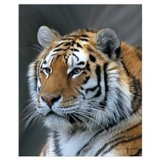 Portrait of a Tiger Canvas Art