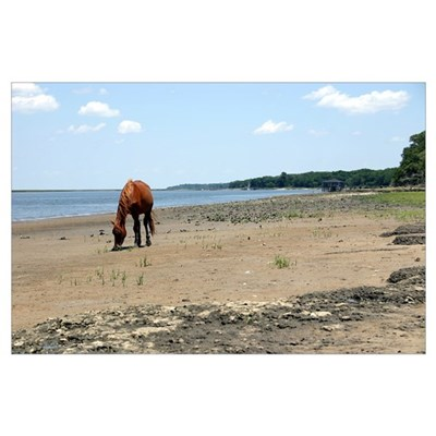 Cumberland Island Horse Poster