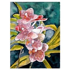 hybrid orchid flowers waterco Poster