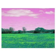 Yellowgreen Field and Pink Sky Poster