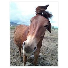 Josie, the mule Poster