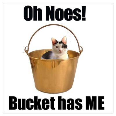 Bucket has cat Framed Print