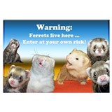 Warning ferrets live here Posters
