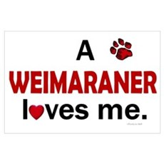 A Weimaraner Loves Me Poster