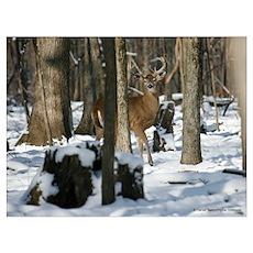 Deer 2842-016 Poster