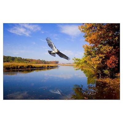 Hawk flying over river fall scene Poster