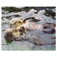Sea Otter Love Canvas Art
