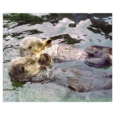 Sea Otter Love Poster