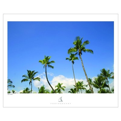 "Oahu Palms - 16""x20"" Poster"