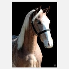 Red Roan Dun Horse
