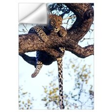 Wild African Leopard Wall Decal