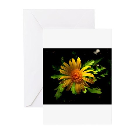 Wilting Yellow Daisy, 1 Greeting Cards (Pk of 10)