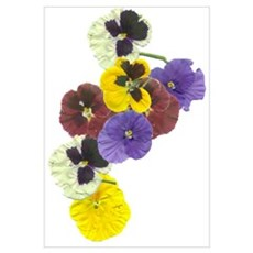 A SPRAY OF PANSIES Poster