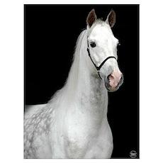 Dapple Gray Horse Poster